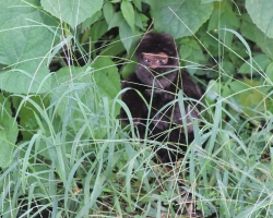 hiding-bigfoot_30664976960_o