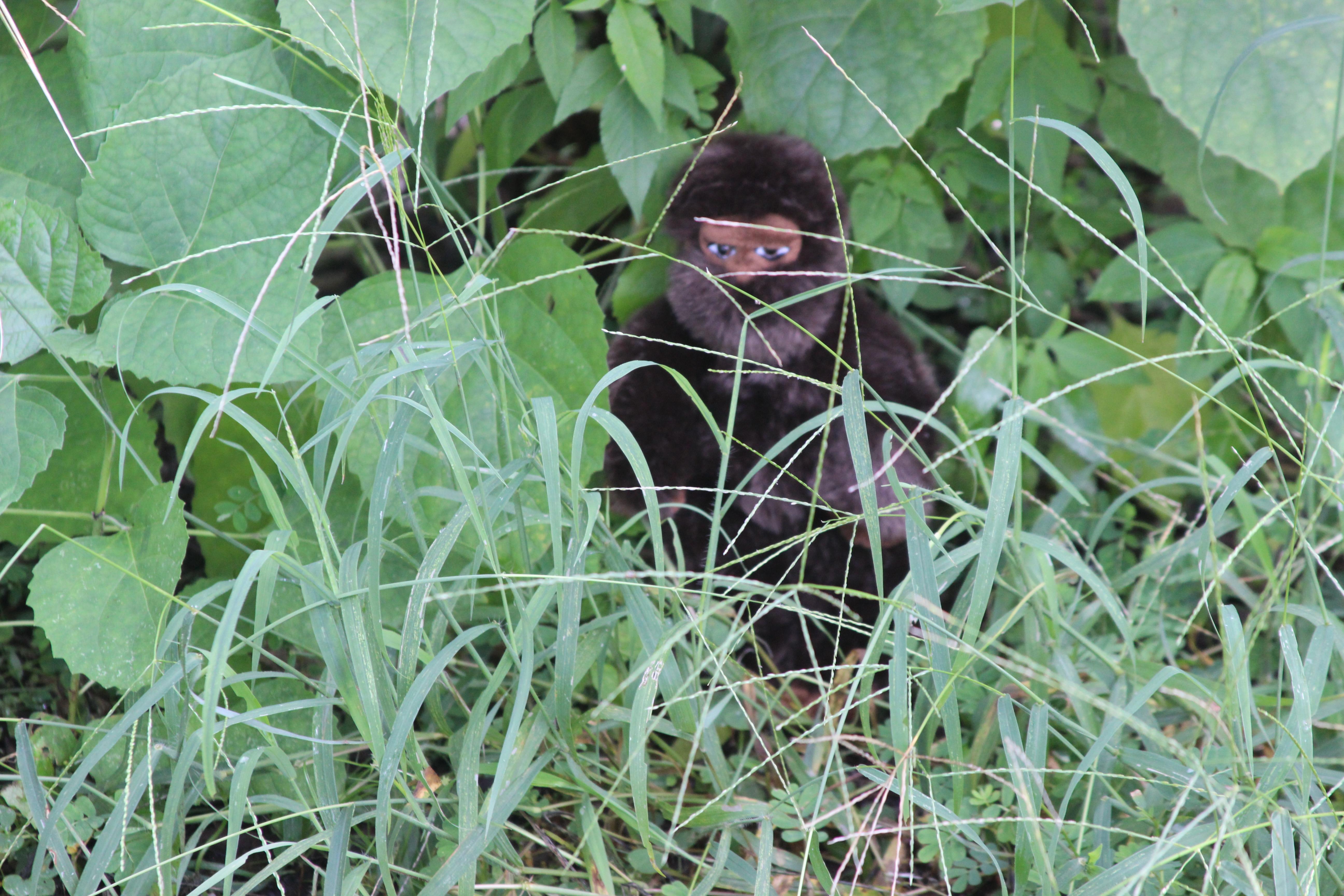 hiding-bigfoot_30664976960_o
